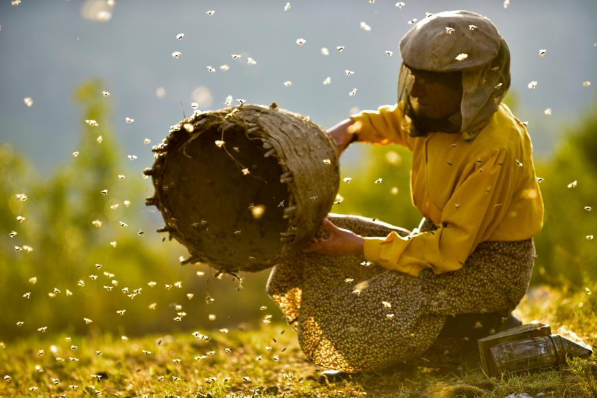 A female beekeeper dressed all in yellow is holding a big beehive with a lot of bees flying around.